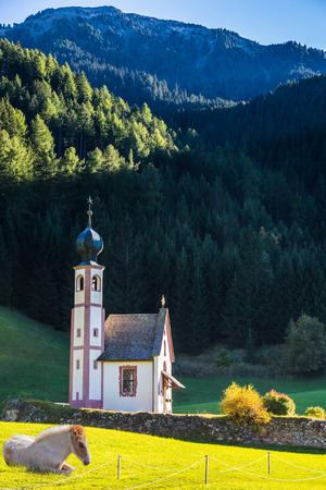 magdalena: On the valley in Dolomites resting horse. The famous church of Santa Magdalena in green Alpine meadows. The concept of an active and eco-tourism
