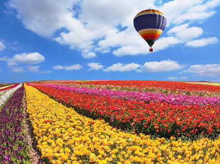 vómito: Over the field in sky flying big balloon. Elegant multi-color rural fields with flowers - ranunculus Foto de archivo
