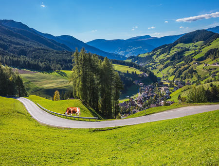 Sunny in Dolomites. On the green grass hillside grazing cow. Forested mountains surrounded by green Alpine meadows. The concept of active and eco-tourism