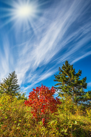The concept of ecological and recreational tourism. Walk on the park in warm silent day. Cirrus clouds and autumn sun in Pinawa Provincial Heritage Park