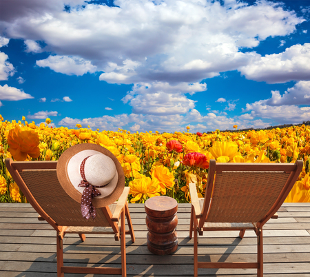 outerwear: Pair of wooden comfortable sun loungers next to fields of garden buttercups. The concept of recreation and eco-tourism