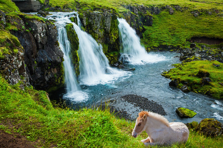 Concept of exotic and extreme tourism. Horse grazing in the grass. At the foot of the mountain Kirkjoufell cascade falls Kirkjoufellfoss. Summer in Iceland