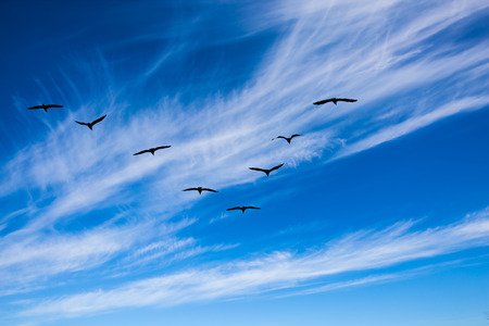 Indian summer in Canada. The pack of migratory birds flies in the cloudy sky. Old Pinawa Dam Park Stock Photo