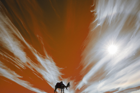 Camel in harness. Silhouette. The sun makes its way through the flashes of red and white fire