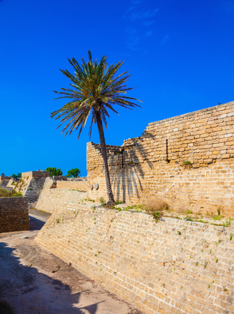 The ancient Caesarea, Israel. Lone palm tree growing on the rocks Stock Photo