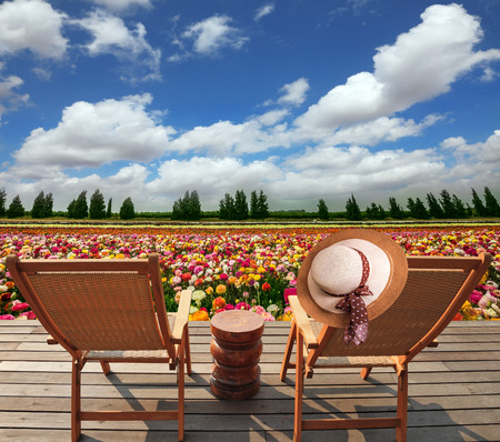 Two convenient chaise lounges stand on a roadside on wooden scaffold. The elegant womens hat hangs on one of them. The huge field of flowers in the kibbutz on border with Gaza Strip Stock Photo