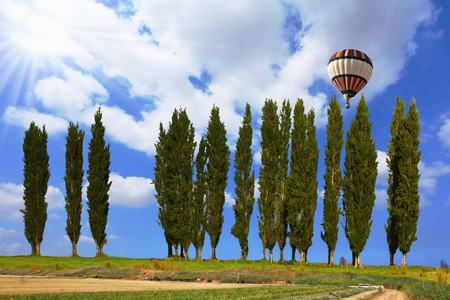 Giant colorful balloon flying in the cloudy sky above the cypress alley