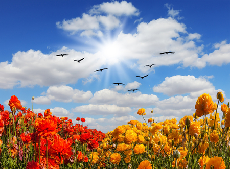 Migratory birds flying high in the sky. Strong wind drives the cirrus clouds. The southern sun illuminates the flower fields. Concept of rural tourism Stock Photo