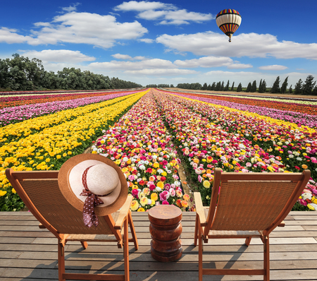 Great multi-colored balloon flies over flower field.  Israeli kibbutz on the border with Gaza Strip.  Two chaise-longue standing on wooden platform