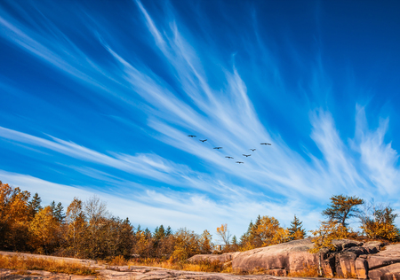 Indian summer in Old Pinawa Dam Park. Flock of birds flying in the sky above the autumn forest. The concept of ecological and recreational tourism