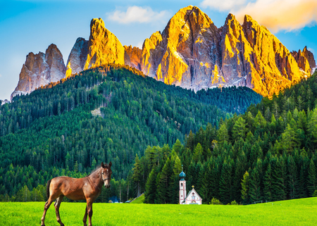 Sleek horse is grazing in the valley of the Dolomites. Magnificent serrated cliffs illuminate the summer sunset. The concept of eco-tourism in Tirol