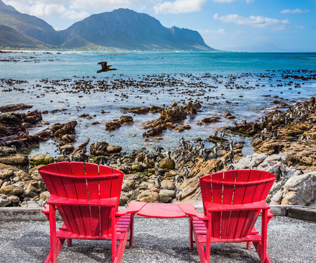 African penguins among coastal stones. Two armchairs chaise longue by Atlantic ocean. Boulders Penguin Colony in the Table Mountain National Park, South Africa. The concept of ecotourism Stock Photo
