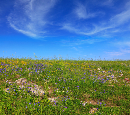 Picturesque carpet of spring flowers and fresh grass. Israel. The blossoming Golan heights in a fine sunny day Stock Photo