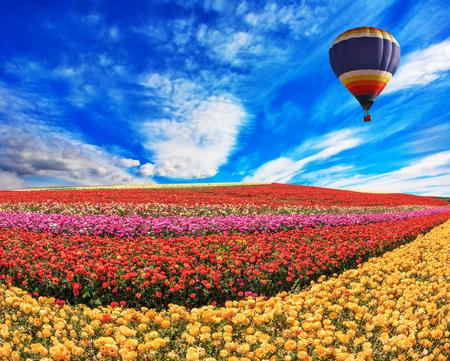 vómito: Sobre el campo en el cielo volando gran globo. Elegantes campos rurales multicolores con flores - ranúnculo - rojo y amarillo