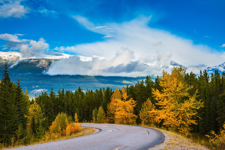The road goes into the distance. Canadian Rockies in beautiful September day. Highway is among the mountains and forests yellowed Stock Photo