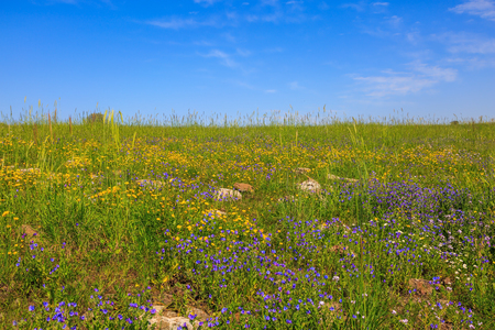 The spring blossoming Golan heights, Israel. Flat hills are covered with a continuous carpet of wild flowers