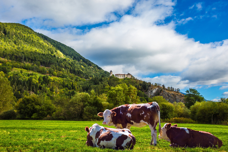val: Well-fed cows graze on the green meadow of a mountain valley. Rural pastoral in the Val de Funes, Dolomites. Warm autumn day. The concept of ecological tourism
