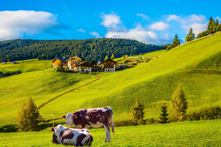 Charming rural landscape in the Dolomites. Magnificent summer sunset in Tirol. Sleek cows graze in the grass. The concept of eco-tourism Stock Photo