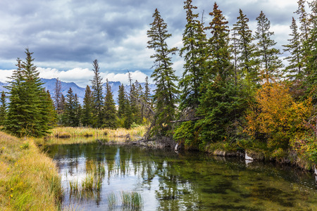 Magnificent journey through the Rocky Mountains of Canada. The valley along the Pocahontas road. Concept of active and ecological tourism. Shallow-water lakes, firs and mountains