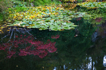 In pond, overgrown with lilies, reflected trees and flowers. Delightful landscaped and floral park Butchart Gardens on Vancouver Island Stock Photo