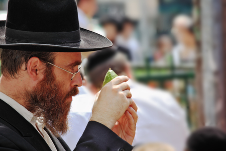 jewish: Bnei Brak - September 22: An orthodox Jew in glasses and black hat picks citrus before the holiday of Sukkot September 22, 2010 in Bnei Brak, Israel Editorial