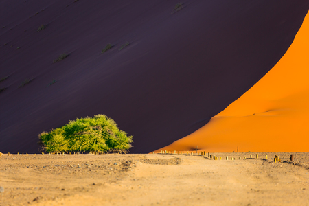 The foot of the giant violet-orange dune in the Namib desert and lonely small tree. The concept of extreme and exotic tourism. Namibia, South Africa