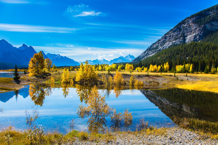 Sunny autumn day in the Rocky Mountains of Canada. The surface of artificial Abraham lake reflects cirrus clouds and trees. The concept of ecological and active tourism