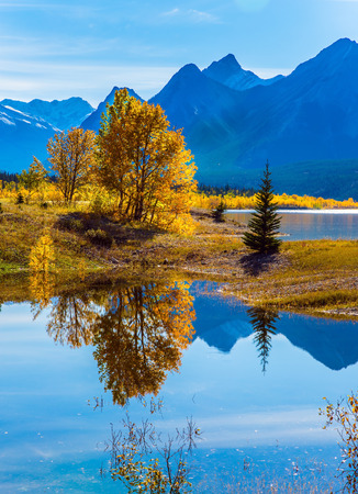 cirrus: Sunny autumn day in the Rocky Mountains of Canada. The concept of ecological and active tourism. The artificial Abraham lake reflects light cirrus clouds and trees Stock Photo