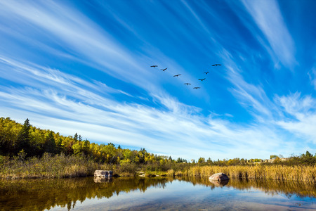cirrus: Old Pinawa Dam Park. Indian summer in Canada. Flock of birds flying in the sky over the river Winnipeg. The concept of ecological and recreational tourism