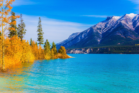 Picturesque turquoise Abraham Lake in a flood. Journey to the Golden Autumn in Rocky Mountains. The flooded coastal gold aspen grove. The concept of ecological and active touris Stock Photo