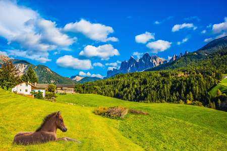 Sleek horse resting in the tall grass. Warm autumn day in the Val de Funes, Dolomites. Concept of rural ecotourism