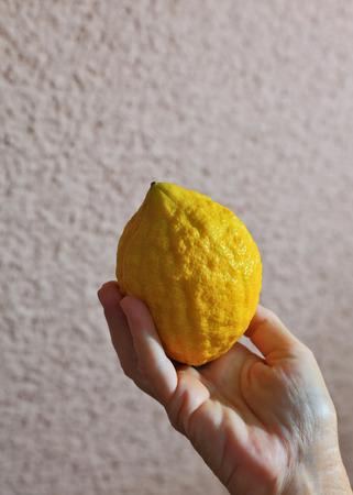 sukkoth festival: Ritual yellow citrus - etrog in a female hand. Autumn Jewish holiday - Sukkot