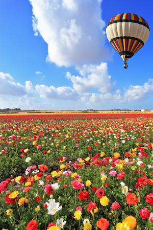 Giornata di primavera in Israele. Il palloncino a righe luminoso vola su un campo di giardino colorato di burro. Archivio Fotografico - 85253064