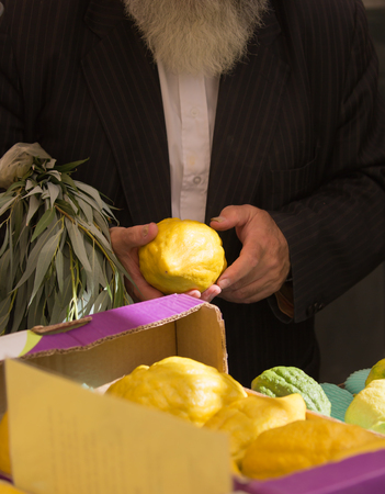 sukkoth festival: Sale of ritual plants on the traditional pre-holiday market in the capital of Israel, Jerusalem. The buyer chooses the citrus - etrog. Jewish autumn holiday Sukkot