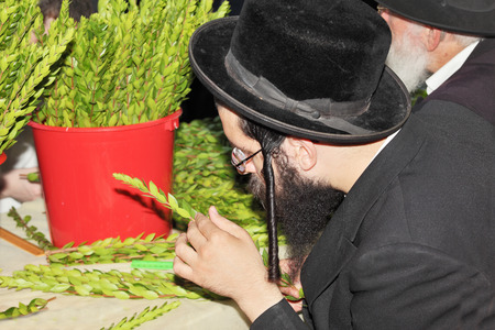 sukkoth festival: BNEY-BRAK, ISRAEL - SEPTEMBER 17, 2013:  Grand Bazaar on the eve of the Jewish holiday. The young man in a black hat carefully chooses ritual plant - myrtle