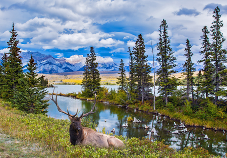 The deer with branched horns rests on the shore of the lake. Grandiose landscape in the Rocky Mountains. The concept of ecological and active tourism