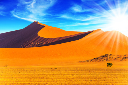 Hot sun of the Namib desert. Namibia, South Africa, sunset. Orange, purple and yellow dunes and small lonely tree. The concept of extreme and exotic tourism