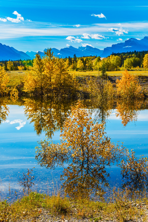 abraham: The concept of ecological and active tourism. Sunny autumn day in the Rocky Mountains of Canada. The Abraham lake reflects light cirrus clouds and trees