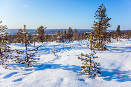 winter finland: Fluffy snow in the field at the edge of the forest. The Polar Circle, Lapland. The concept of exotic and extreme travel. New Years sunny winter day Stock Photo