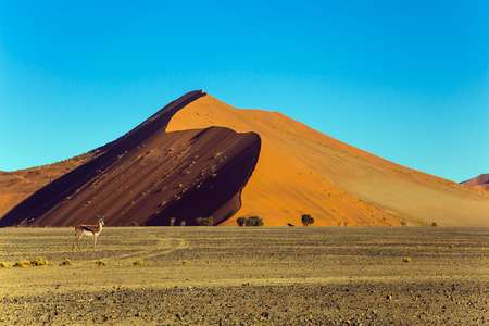 The worlds oldest Namib desert. The famous giant sand dunes in Namib-Naukluft park at sunset.  The concept of extreme and exotic tourism