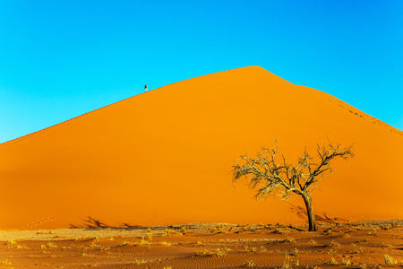 Giant orange dune and small lonely tree in the Namib Desert. Namibia, South Africa. The concept of extreme and exotic tourism Stock Photo