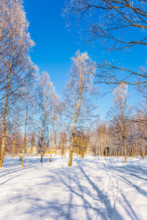 Sunny frosty day in the Arctic, Lapland. Hardwood Grove in Christmas. Transparent cold air of forest. Crouching road in the snow. The concept of extreme tourism