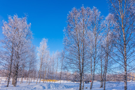 Bright winter frosty day. Transparent cold air of forest. Crouching road in the snow-covered aspen grove. The concept of extreme tourism