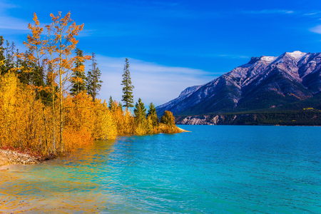 Bright colors of autumn. Incredibly beautiful Abraham lake with a turquoise water. On the shores there are autumn forests. Concept of ecological and active tourism Stock Photo