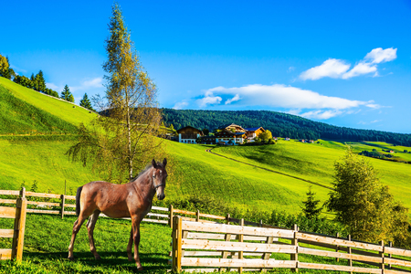 Magnificent summer sunset in Tirol. Charming rural landscape in the valley of the Dolomites. Sleek horse grazing in the grass. The concept of eco-tourism