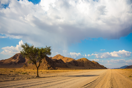 Travel to Namib-Naukluft National Park. Dirt road in the middle of the savannah sunset lit