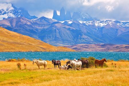 Bello cavallo di razza che pasce in un prato vicino al lago. All'orizzonte, alte scogliere Torres del Paine Archivio Fotografico - 92106676