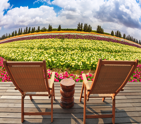 The huge field flowers on kibbutz on the border with Gaza Strip. At the edge of field on a wooden platform are two comfortable sun loungers Stock Photo