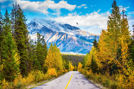 The road goes into the distance. Canadian Rockies in beautiful September day. Great Highway is among the mountains and forests yellowed