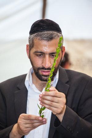 JERUSALEM, ISRAEL - OKTOBER 8, 2014:  Young religious man in a gray skullcap carefully chooses ritual  myrtle - adas for Sukkot Editorial